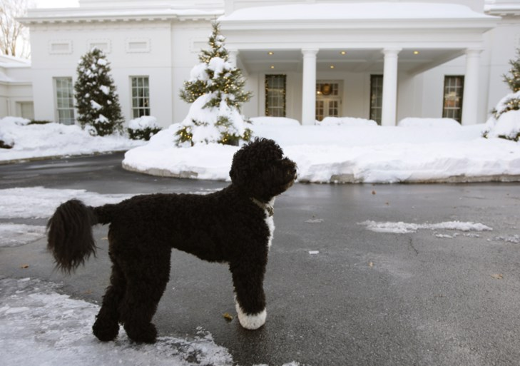 The Obama family mourns a four-legged friend: