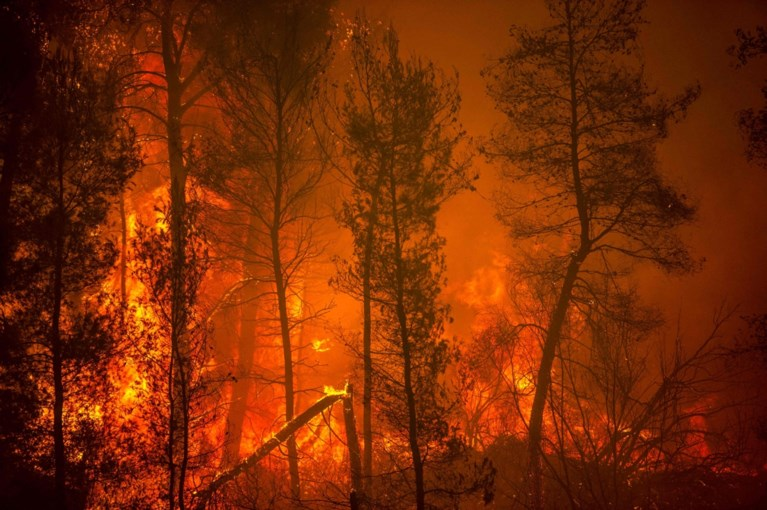 2,000 people evacuated from the Greek region of Evia: forest fires removed 50,000 hectares of ash